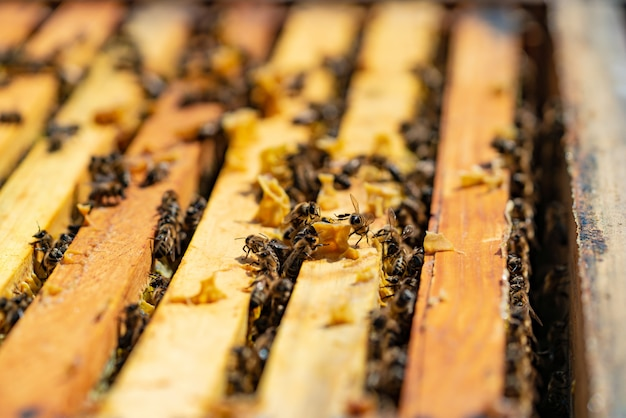 Bees bring honey to their beehives in warm weather all day