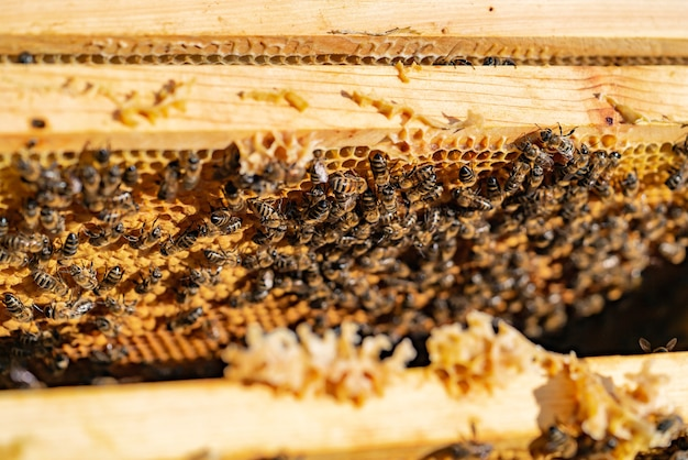 蜂は庭の夏の巣箱に蜂の巣で蜂蜜をフレームに運びます。閉じる