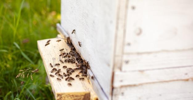 꿀벌은 꽃에서 꽃가루를 모아 벌집으로 운반합니다. 꿀, 양봉을 위한 꿀벌 사육의 개념