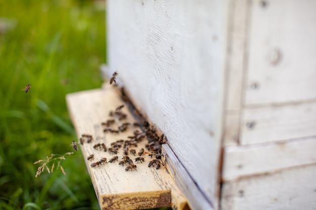Пчелы собирают пыльцу с цветов и несут ее в улей. концепция разведения пчел на мед