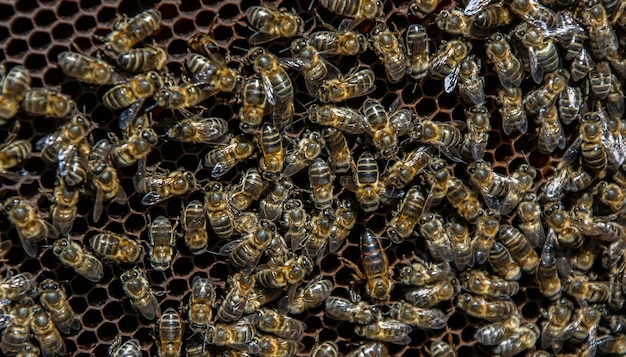 Bees in a comb producing honey selective focus shot on bees