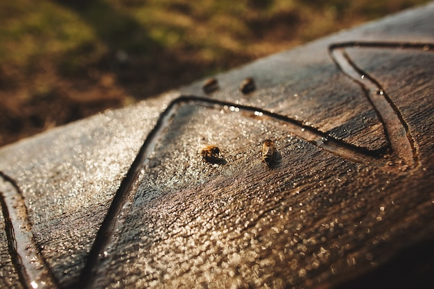 Bees drink water from a wooden board