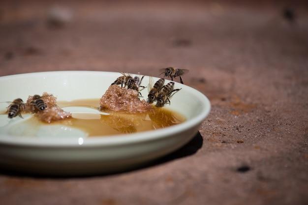 皿の上に横たわっている毛むくじゃらの砂糖を食べる蜂がクローズアップ