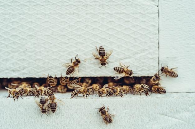 Пчелы заходят в белый улей