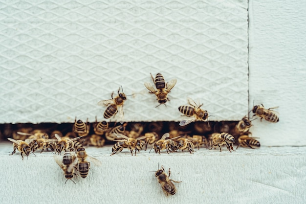 Bees entering the white hive