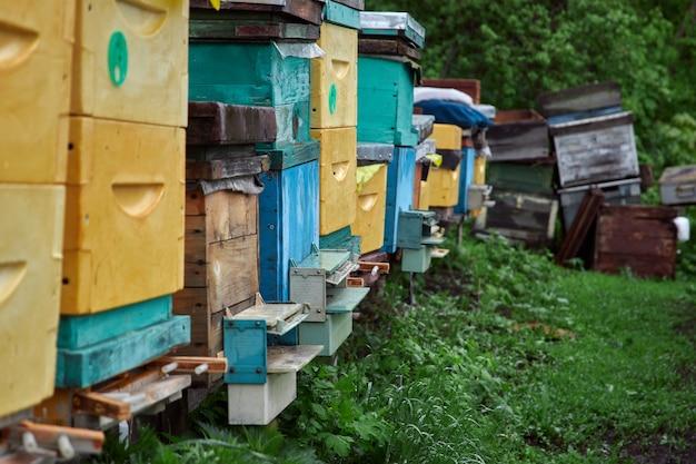 ミツバチは養蜂場の巣箱の前を飛んで、花粉を集めて蜂蜜を作ります