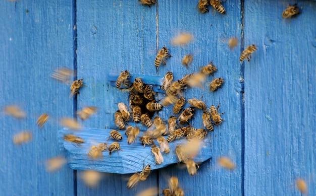 Пчелы летают в улей.
