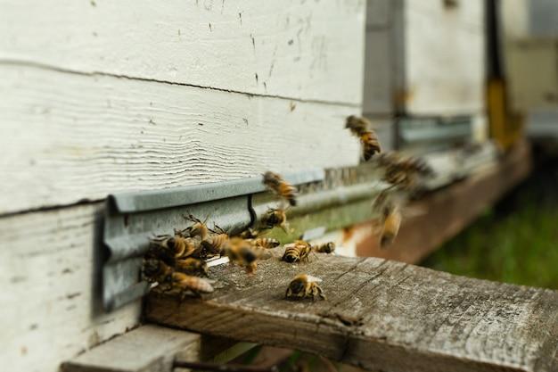 夏の日にはミツバチが巣箱に飛んで花粉を次々と運びます