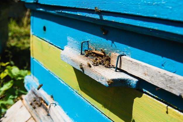 着陸ボードに飛んでいる蜂。養蜂場で巣箱に飛んでいる働き蜂がいる巣箱。