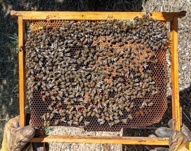 꿀벌 꿀벌에 꿀 선택적 초점 샷을 생산하는 빗