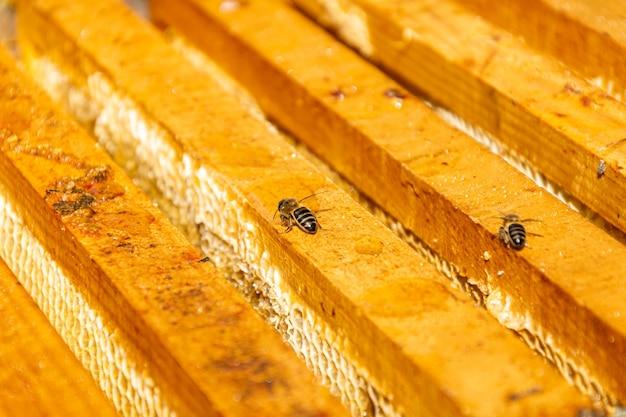 꿀벌 꿀벌에 꿀 선택적 초점 샷을 생산하는 빗 프리미엄 사진