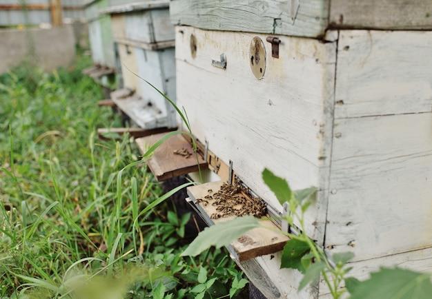 Пчелы на фоне деревянных ульев крупным планом