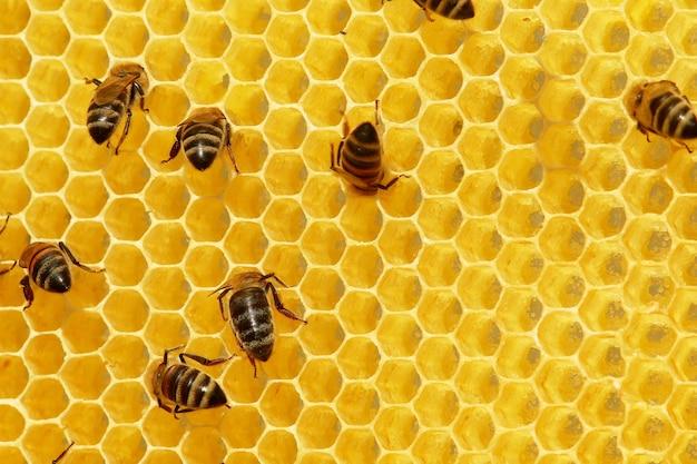 벌집에 꿀벌
