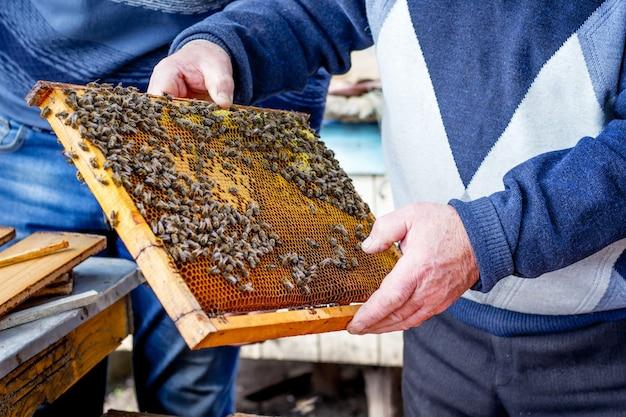 Пчелы на сотовой раме, которую пчеловод держит в руках. работа на пасеке