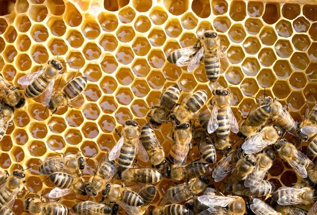 ハニカム上の蜂