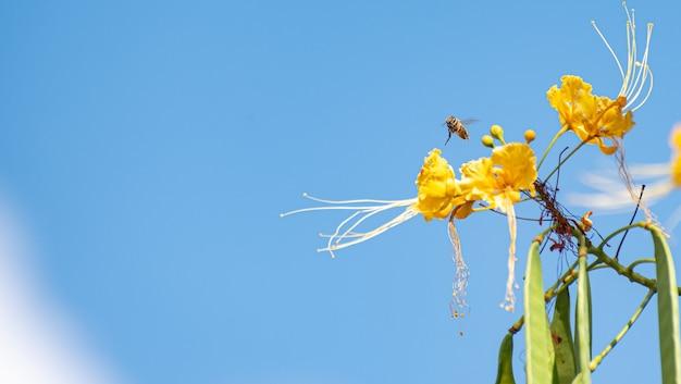 꽃과 푸른 하늘을 pollinating 꿀벌