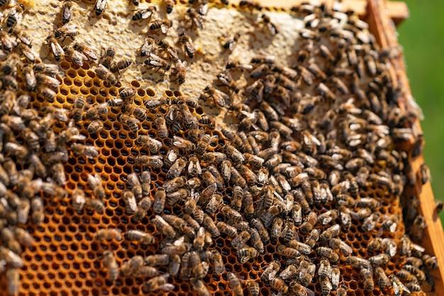 ミツバチは木の板に蜂蜜と蜂の巣の上に座っています