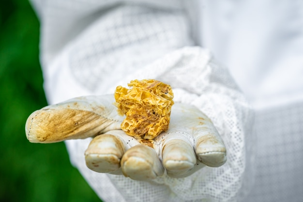 Beeswax in the hands of the beekeeper