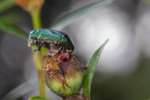 Жук и муравей в их естественной среде обитания.
