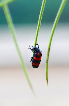 Beetle bug