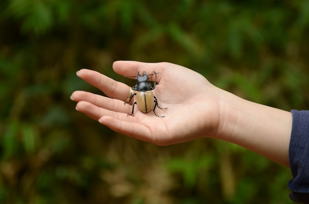 Beetle on hand, nature concept