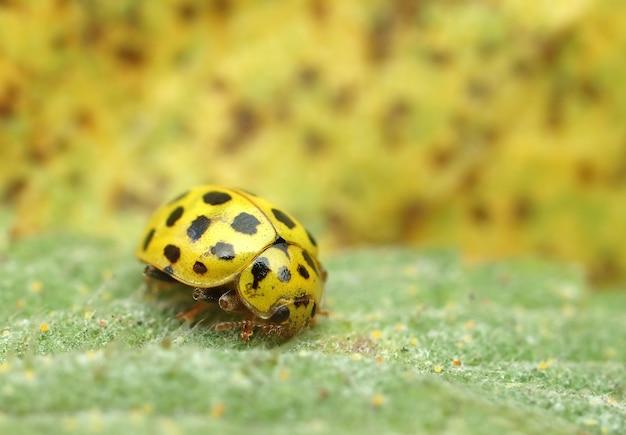 딱정벌레 무당 벌레