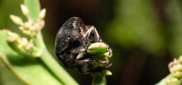 딱정벌레, 검은 배경, 선택적 초점을 가진 녹색 식물에 딱정벌레의 매크로 세부 사항.