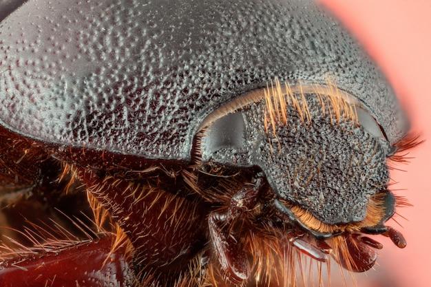 딱정벌레 . 매크로 사진