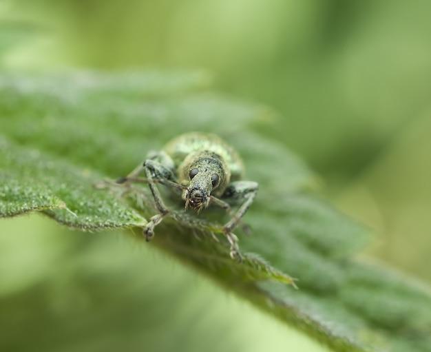 잎사귀에 딱정벌레