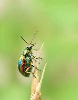 식물 위에 자리 잡은 딱정벌레