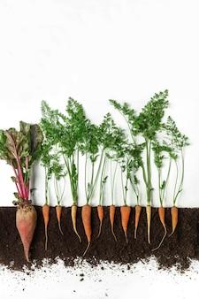 ビートルートとニンジンは地面、断面、切り抜きコラージュで育ちます。分離した葉を持つ健康な野菜植物。農業、植物学、農業のコンセプト