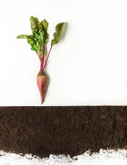 ビートルートは地面、断面、切り抜きコラージュで育ちます。分離した葉を持つ植物を育てる。農業、植物学、農業のコンセプト