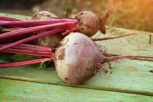 Beets on a bench