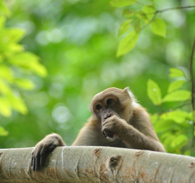 Behaviors of monkey in the nature, wild macaques