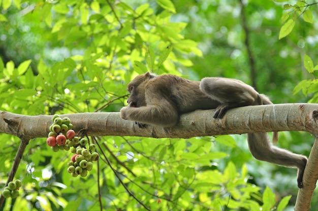 Поведение обезьяны в природе, дикие макаки