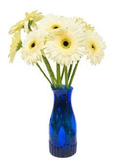 白い背景で隔離の青い花瓶のベージュのガーベラの花