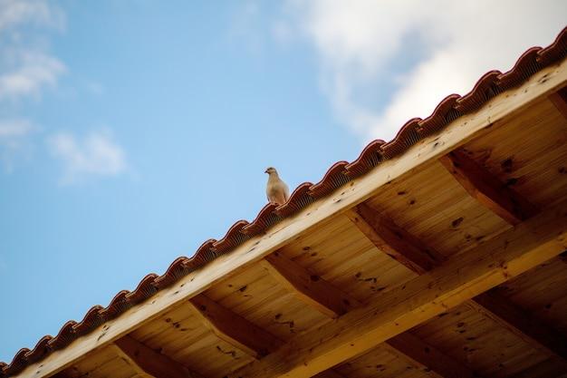 화창한 날에 아름다운 푸른 하늘을 배경으로 나무 옥상에 있는 베이지색 비둘기