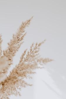 白い壁にベージュの葦。ニュートラルカラーで美しい