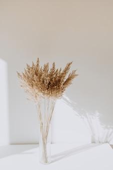 벽에 아름 다운 그림자와 함께 흰색 테이블에 서있는 꽃병에 베이지 색 갈 대. 블로거를위한 최소한의 스타일 컨셉. 파리의 분위기.