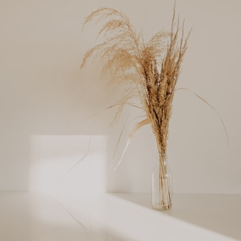 Beige reeds in small glass vase on white table agains white wall at cozy home
