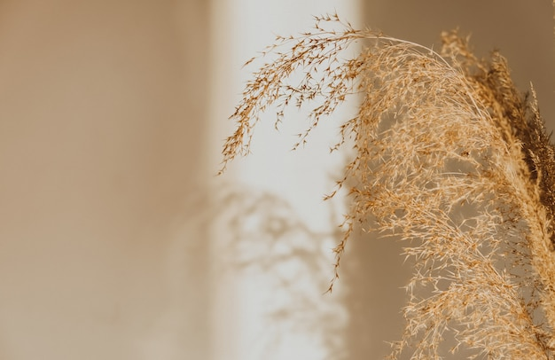Beige reeds standing on the wall. morning lights from window. selective focus, close up
