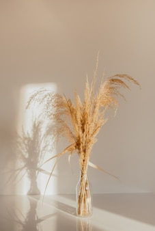 Beige reeds in vase on white table agains white wall
