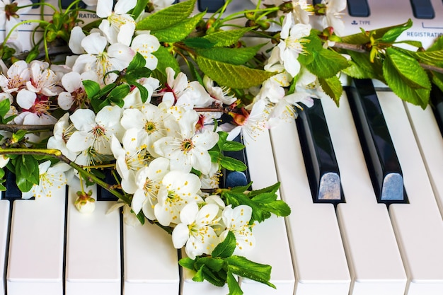 Beket of apricot flowers and cherry on the piano keys_