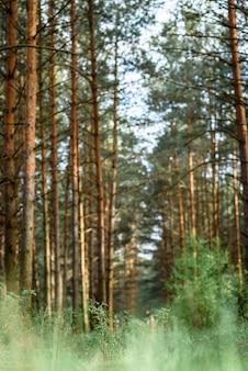 春のベラルーシの森の風景。ベラルーシ共和国。