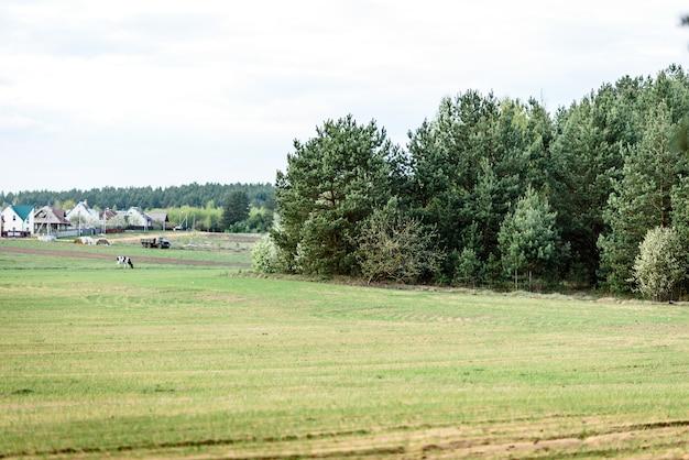 ベラルーシの風景。空の背景に春のフィールドと森。