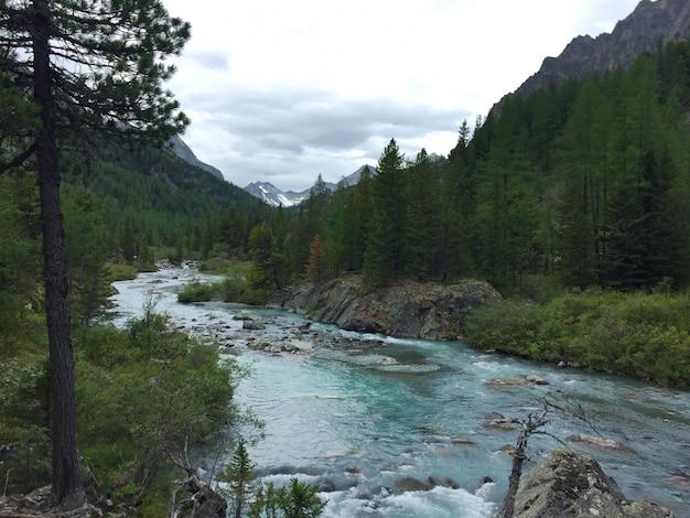 流れる森の青い川。 belukha国立公園、アルタイ山脈、シベリアのkucherla川