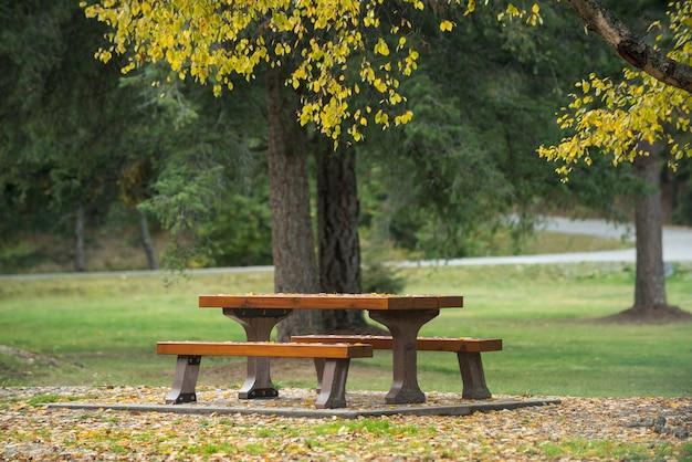 森林公園の木の下の横にあるベンチ