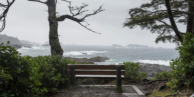 Bench at coastline, pacific rim national park reserve, ucluelet, vancouver island, british columbia,