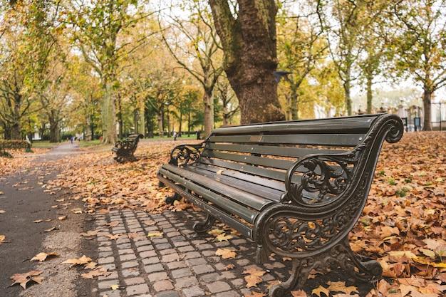 木々に覆われた公園のベンチと秋の日光の下で葉