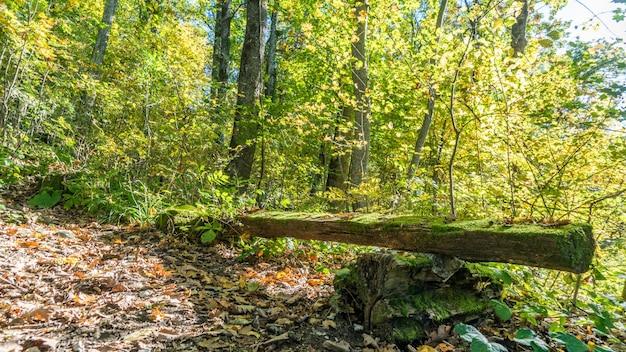 森のベンチ。ロシア、ソチ近郊の森でのハイキング。